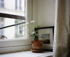 potted pilea houseplant in window ; Gardenista