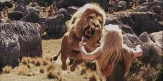 The-Chronicles-of-Narnia-The-Lion-The-Witch-and-the-Wardrobe-the-chronicles-of-narnia-2152050-1024-512.jpg (1024×512)