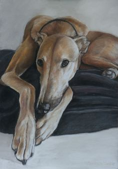 Shop Tan Greyhound Dog Art Photo Print created by CharlottesWebArt. Animal Paintings, Animal Drawings, Greyhound Art, Italian Greyhound, Grey Hound Dog, Polychromos, Illustrations, Dog Portraits, Dog Art
