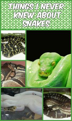 This post is sponsored by petMD Reptile Center, and the BlogPaws Professional Pet Blogger Network. I am being compensated for helping spread the word about Reptile Ownership, butIonly share information Ifeel is relevant to myreaders. petMD® and PetSmart are not responsible for the content of this article. Before meeting my Sess, Sal's Ball Python, I had a lot of misconceptions about snakes. I think a lot of us do. It's natural. Snakes have been depicted in so many ways in literature and…