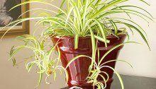 Indoor Plants That Need Little Sunlight