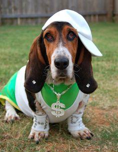 Halloween Photo Contest: Harley as Hound Doggy DOGG