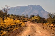 Marakele - An early morning drive in Marakele National Park, Limpopo Province South Africa.