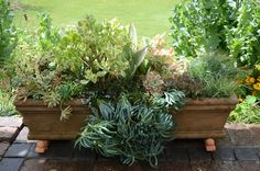 Low-maintenance and water wise, these striking planting combos will inspire you to make succulents the star of your mixed containers. Cool Succulents, Succulents In Containers, Succulent Pots, Planting Succulents, Container Vegetables, Container Gardening, Shade Garden, Garden Plants, Container Design