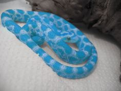 Blue Corn Snakes lol if only Pretty Snakes, Cool Snakes, Colorful Snakes, Beautiful Snakes, Les Reptiles, Cute Reptiles, Reptiles And Amphibians, Rare Animals, Animals And Pets