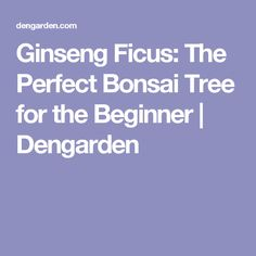 Ginseng Ficus: The Perfect Bonsai Tree for the Beginner | Dengarden