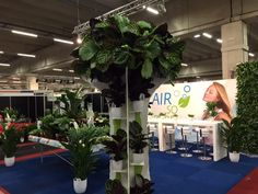 Trade Fair Aalsmeer 2015 Calatheaboom