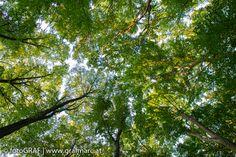 Warum der Wald grün ist - Ja warum eigentlich? Wieso sehen wir grün, wenn wir ins Dickicht der Laubblätter etwa im Nationalpark Thayatal blicken? Gute Frage, dachten wir und widmeten ihr gleich einen Blogbeitrag. Wer verantwortlich für die Farbe grün ist und wie sich das genau zuträgt, das könnt ihr jetzt im Blog nachlesen: http://blog.np-thayatal.at/ Ihr werdet die Blätter nie mehr mit gleichen Augen sehen