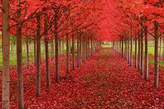 Autumn in St. Louis, Oregon, US