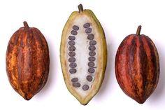 La fruta del cacao, la base del chocolate y el secreto del sabor intenso de nuestro helado