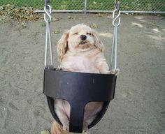swinging #dog