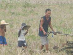 Onli in da Pilipins: A Writer's Journal: RUSTIC LIFE IN THE FARM AT PILA, LAGUNA