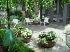 white annuals in the garden
