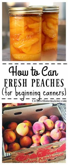 Canning Peaches, Canning Pickles, Canning Tips, Home Canning, Canning Recipes, Pickled Peaches, Canning Food Preservation, Preserving Food, Preserving Peaches