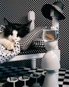 Checkerboard Cat, a 1000 piece jigsaw puzzle by Springbok Puzzles.