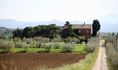Rustic Italy 4 Foodie Lovers - A different Guardian Article