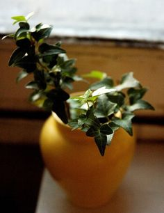 English ivy (Hedera helix) A study found that the plant reduces airborne fecal-matter particles. It has also been shown to filter out formaldehyde found in some household cleaning products.