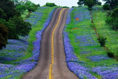 The road goes on -Texas Hill Country in the spring on year when the rain falls