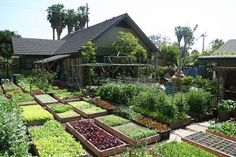 'Way better than a lawn! A backyard grocery.