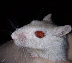 White Fur, Lightning, Animals, Animales, Animaux, Lightning Storms, Animal, Animais, Lighting