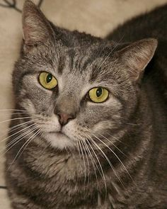 this looks like legrand! Grey Cats, My Buddy, Cat Lady, Animal Rescue, Darkness, Creatures, Friends, Life, Animals