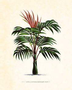 Antique French Palm Tree Plate 6 Botanical 1878 8 x 10 Art Print Wall Decor by BelleMerGraphics on Etsy