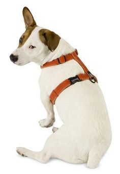 Walking your dog is made easier for you, and more comfortable for your best friend with the Cozy Hemp Dog Harness that helps you safely hold your dog.