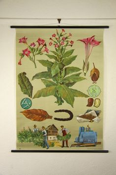 Tobacco Wall Chart design by Empirical Style