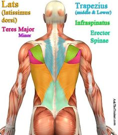 #back workout videos exercise video workouts.