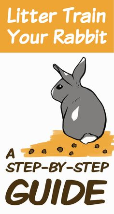 For Poops Sake! How to Litter Train Your Rabbit Rabbit Litter Box, Rabbit Toys, Pet Rabbit, Litter Box Training Rabbits, Rabbit Treats, Lionhead Rabbit, Diy Bunny Cage, Bunny Cages, Rabbit Cages