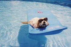 Bellende Hotelgäste, mit Hasso in den Pool: Auch die Reiseindustrie ist inzwischen auf den Hund gekommen. Urlaub mit Vierbeinern liegt im Trend, ob Flusskreuzfahrt, Städtetrip oder Wellnesswochenende.