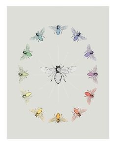 Honey Bee Color Wheel - This needs to be on my wall.