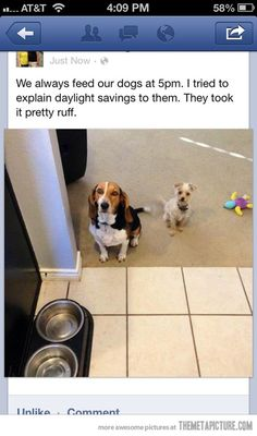 """We always feed our dogs at 5pm. I tried to explain daylight savings time to them.  They took it pretty ruff."" ~ Dog Shaming shame - Beagle"