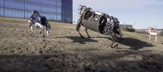 This Robotic Dog Has Hyper-Realistic Movements And Will One Day Rule Us All