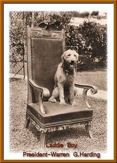 """Laddie Boy – Warren G. Harding's beloved Airedale who had his own seat at Cabinet meetings and gave a 1921 """"interview"""" with The Washington Post in which he talked about Prohibition and shortening the workday for guard dogs."""