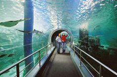Melbourne Aquarium    http://www.australiaholidays.ru/Avstraliya/Spravka/Dostoprimechatelnosti-Avstralii/Luchshee-v-Avstralii/Melburn/Akvarium-Melburna-Melbourne-Aquarium