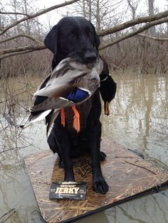 duck hunting #sweetwoodjerky