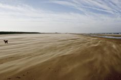 Holkham Beach, Norfolk. I adore this place.