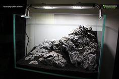 ... Aquarium on Pinterest Aquascaping, Aquarium design and Cichlids
