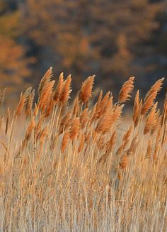 Spicy Wild Grasses