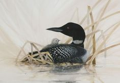 Loon with Baby Painting by jimdickens on Etsy, $35.00