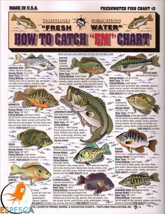 Infografías de peces 43