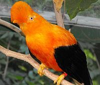 28 Best The Rain Forest Images Nature Animal Pictures Wild Animals