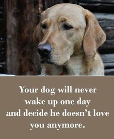 Truth. My dogs have been the furry constant in my life, especially when times were rough.