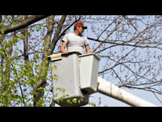 Reviewed: ?????  Greenleaf Tree Service is a top reviewed Tree Service in Bowie, Md. This video shows some of the excellent reviews and testimonials that have been offered by their happy clients. (Real reviews by real customers).For more information you can visit them at:Greenleaf Tree Service 2101 Hideout LaneBowie, Md 20716Call (301) 464-5611http://www.greenleaf-treeservice.com/Share this videoGreenleaf Tree Service Reviews Bowie Mdhttps://www.youtube.com/watch?v=k08UhPoxNO4