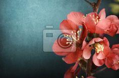 Fotobehang roze bloem