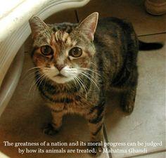 Feline Wisdom