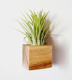 This air plant includes a magnetic planter, which makes it an awesome way to bring in the green in your cubicle or other small space that needs a real plant. (And these air plants are the one plant I can keep alive!)