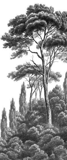 Panoramic wallpaper Pine and Cypress black and white Ananbô jiancai qiangzhi qianghua fengjinghua heibai Landscape Tattoo, Landscape Sketch, Landscape Drawings, Landscape Art, Tree Sketches, Art Drawings Sketches, Tree Drawings Pencil, Scenic Wallpaper, Realistic Drawings