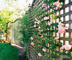 A fence offers seclusion and a space for a pretty plant's blooms. Architectural details on hardscape elements can add visual interest to privacy elements. Here, a gentle curve keeps the eye moving along the top of the fence. Rambling plants, such as this climbing rose, offer a pretty way to soften fences. The tight weave of the open latticework fence screens the view while allowing for good air movement and filtering light to the semiprivate yard. Grass that runs right next to a fence can…
